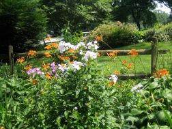 2006-07-03 Garden 070