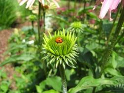 2007-06-30 Garden 052_2