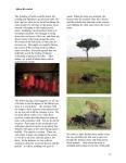 African journal13
