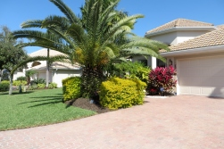 Beautiful villas and various types of palm trees