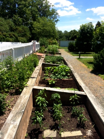 Six raised beds